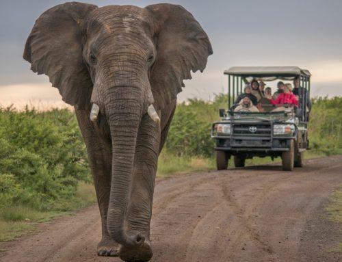 Addo Elephant Park Day Trip